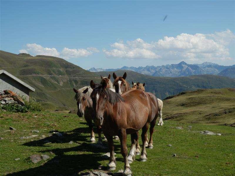 A los pies del aneto y el monte perdido ver tema valle - El valle de los caballos ...